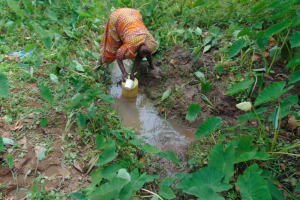 The Water Project: Nguvuli Community, Busuku Spring -  Collecting Water