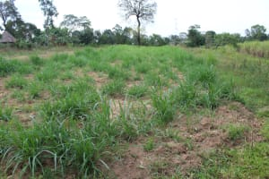 The Water Project: Nguvuli Community, Busuku Spring -  Nappier Grass Farm