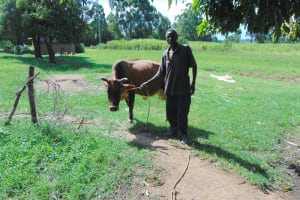 The Water Project: Indulusia Community, Yakobo Spring -  A Community Member Grazing His Cow