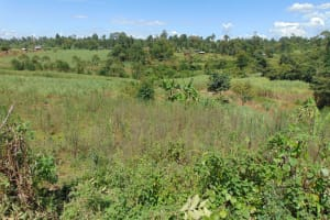 The Water Project: Indulusia Community, Yakobo Spring -  Community Landscape