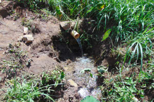 The Water Project: Indulusia Community, Yakobo Spring -  Spring Water Source