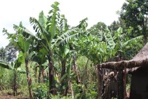 The Water Project: Makale Community, Luyingo Spring -  Banana Plantation