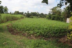 The Water Project: Shitavita Community, Patrick Burudi Spring -  Community Farms