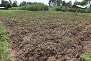 The Water Project: Shitavita Community, Patrick Burudi Spring -  Potato Farm