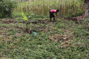 The Water Project: Shitavita Community, Patrick Burudi Spring -  Weeding The Farm