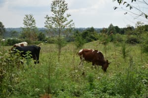 The Water Project: Mukhungula Community, Mulongo Spring -  Land Scape