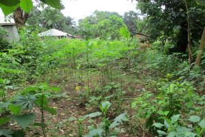 The Water Project: Lungi, Kambia, #6 Bangura St. -  Garden