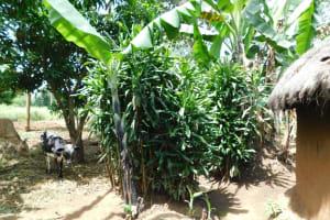 The Water Project: Khaunga A Community, Murutu Spring -  Bathing Shelter