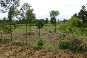 The Water Project: Khaunga A Community, Murutu Spring -  Landscape Around Murutu Spring