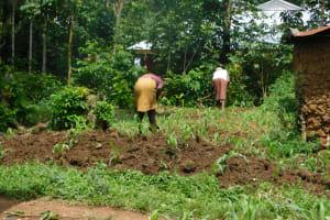 The Water Project: Musango Community, Wambani Spring -  Farming The Major Activity
