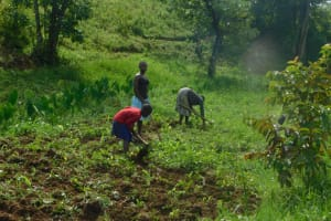 The Water Project: Maraba Community, Nambwaya Spring -  Farming The Major Activity
