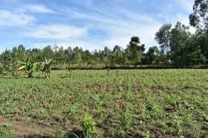 The Water Project: Emusaka Community, Muluinga Spring -  Landscape Around Muluinga Spring