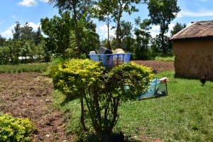 The Water Project: Bukalama Community, Wanzetse Spring -  Live Bush And Bin As