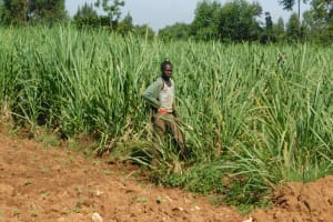 The Water Project: Bukalama Community, Wanzetse Spring -  Working In Sugarcane Field