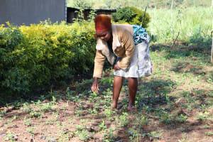 The Water Project: Bukhaywa Community, Ashikhanga Spring -  Weeding In Her Farm