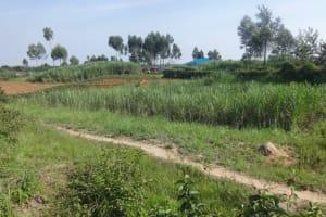 The Water Project: Mahira Community, Mukalama Spring -  Landscape