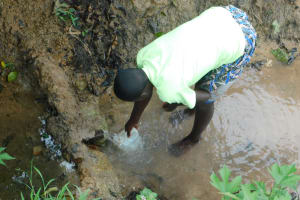 The Water Project: Mwitwa Community, Matiang'i Spring -  Collecting Water From Matiangi Spring