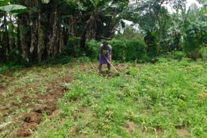 The Water Project: Mwitwa Community, Matiang'i Spring -  Farming The Major Community Activity
