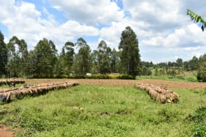 The Water Project: Shianda Township Community, Olingo Spring -  Landscape