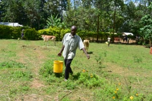 The Water Project: Shianda Township Community, Olingo Spring -  Water From Olingo Spring In Use