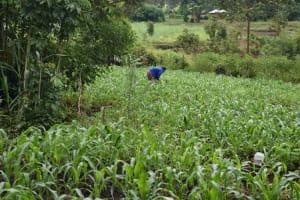 The Water Project: Maraba Community, Shisia Spring -  Farming Is The Major Activity