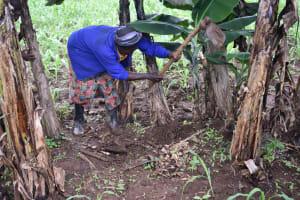The Water Project: Maraba Community, Shisia Spring -  Planting Of Bananas