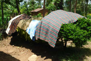 The Water Project: Eshimuli Community, Mbayi Spring -  Clothes Drying On Bushes