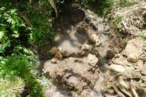 The Water Project: Eshimuli Community, Mbayi Spring -  Current Condition Of Mbayi Spring