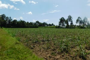 The Water Project: Eshimuli Community, Mbayi Spring -  Landscape