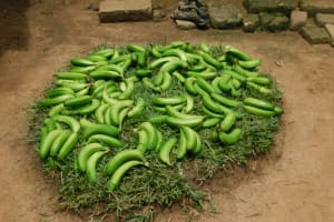The Water Project: Eshimuli Community, Mbayi Spring -  Green Bananas For Some Matoke