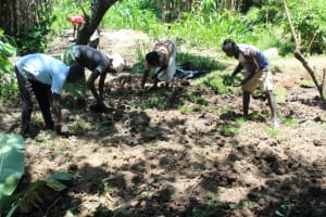 The Water Project: Litinye Community, Shivina Spring -  Grass Planting