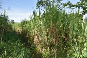 The Water Project: Machemo Community, Boaz Mukulo Spring -  Pathway To Spring