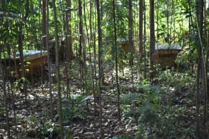The Water Project: Machemo Community, Boaz Mukulo Spring -  Bee Keeping