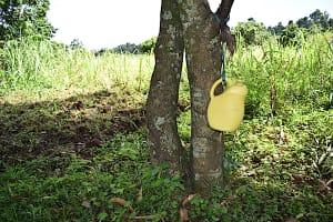 The Water Project: Makhwabuye Community, Majimazuri Lusala Spring -  Handwashing Facility