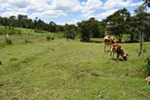 The Water Project: Mukangu Community, Mukasia Spring -  Community Landscape