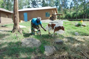 The Water Project: Bukhakunga Community, Wakukha Spring -  Attending To The Animals
