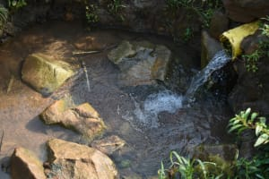 The Water Project: Indulusia Community, Wanyama Spring -  Water Source
