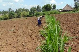 The Water Project: Bukhakunga Community, Maikuva Spring -  Farming