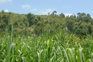 The Water Project: Bukhakunga Community, Maikuva Spring -  Landscape