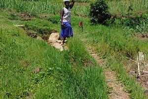 The Water Project: Bukhakunga Community, Maikuva Spring -  Leaving The Spring