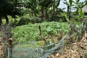 The Water Project: Shamoni Community, Shiundu Spring -  Kitchen Garden
