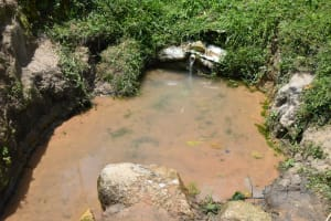 The Water Project: Shamoni Community, Shiundu Spring -  Open Unprotected Spring