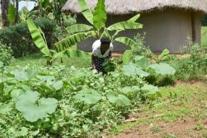The Water Project: Shamoni Community, Shiundu Spring -  Picking Pumpkin Leaves To Make Lunch