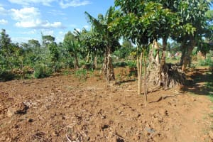 The Water Project: Indulusia Community, Osanya Spring -  Banana Farm