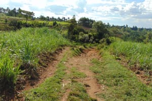 The Water Project: Indulusia Community, Osanya Spring -  Community Landscape