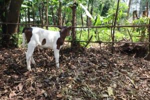 The Water Project: Makhwabuyu Community, Sayia Spring -  Animal Pen