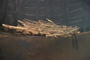 The Water Project: Makhwabuyu Community, Sayia Spring -  Drying Firewood In The Kitchen