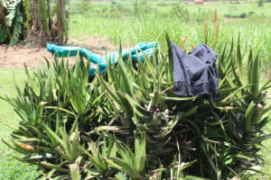 The Water Project: Mayuge Community, Ucheka Spring -  Clothes Drying On Aloevera Plant