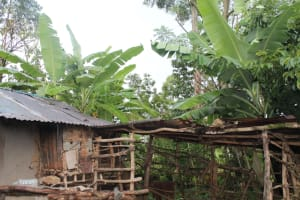 The Water Project: Shibikhwa Community, Musotsi Spring -  Banana Plantation