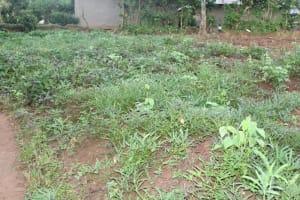 The Water Project: Shibikhwa Community, Musotsi Spring -  Potato Farm